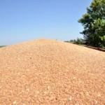 Veliki rast ruskog izvoza pšenice