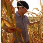 Suša uništila usjeve i voće, stiže novi talas poskupljenja