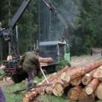 Šinik: Poboljšano snabdijevanje drvoprerađivača