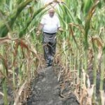 U Srbiji štete od suše stotine miliona evra