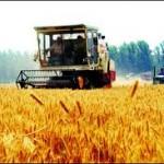 Na području Modriče počela žetva pšenice i zobi