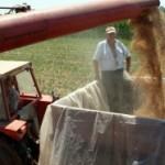 Prostran: Očekuje se rod pšenice od 2,35 miliona tona