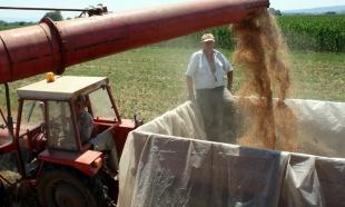 Golubović: Otkupiti još 100.000 tona pšenice