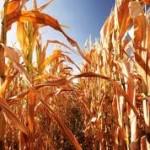 Hrvati bez odštete zbog suše