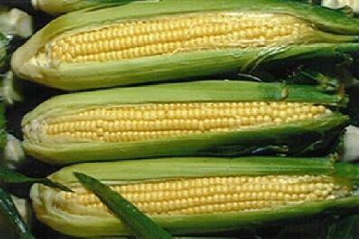 gmo kukuruz
