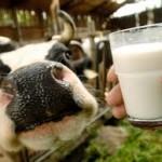 PKV traži veće premije za mlijeko, tov junadi i svinja