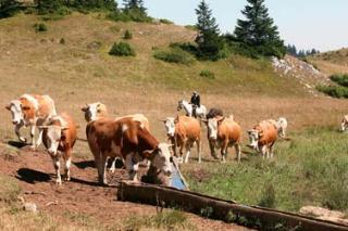 Počinje izložba stočarstva