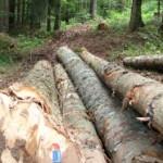 """""""Šume Srpske"""" direktno ulagale u prostu reprodukciju"""