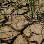 Zbog suše se očekuju veće cijene mlijeka i mesa