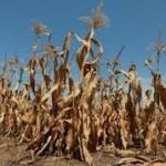 Formiran Stručni tim za praćenje uticaja suše