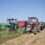 """Sjetva pšenice """"na suvo"""" garantuje visok prinos"""