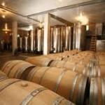 Vukoje: Uskoro prvo desertno vino i zasadi maslina