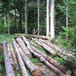 """Dobit šumskog gazdinstva """"Drina&"""
