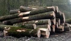 Ovogodišnji izvoz drvne industrije 13,3 odsto viši nego 2013. godine