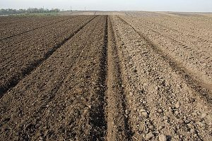 Srbija: Stranci neće moći da kupuju zemljište u zoni od 10 kilometara od granice