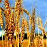 Vrijednost prodaje poljoprivrednih proizvoda manja za 7,6 odsto