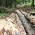 Partnerskim radom sa Njemačkom do zaštite i obnove šuma