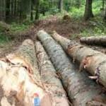 Drvoprerađivači iz RS kupuju robu u FBiH!