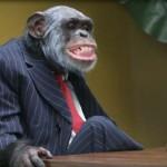 Majmuni nikada ne štede, ali su zato racionalniji prema novcu od čovjeka