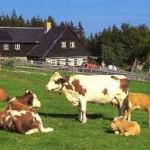 Brčko: Ugrožen opstanak farmi u Krepšiću dva