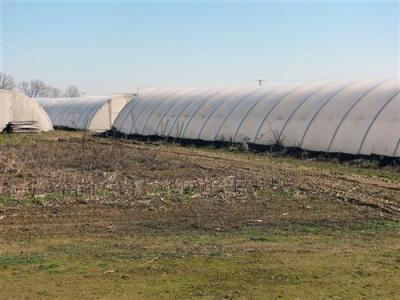 Krunić: Žene sve zainteresovanije za biznis na selu