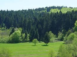 Pošumljeno 2,5 hektara goleti