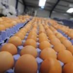 Crna Gora više ne mora da uvozi jaja