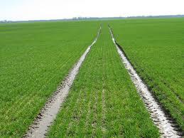 Nastavak uspješne saradnje Srbije i Holandije u agraru