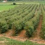 Uspješna realizacija projekta unapređenja poljoprivrede