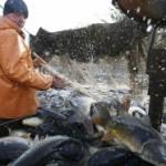 Izvozićemo samo med i ribu