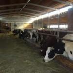 Farme u RS puste, a u svijetu pune kao košnice