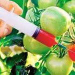 Na hrvatskom tržištu nema genetski modifikovane hrane