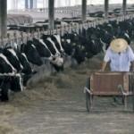 Poljoprivrednici ogorčeni zbog nemogućnosti izvoza mlijeka u Hrvatsku