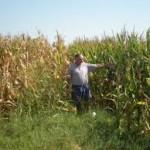 Kukuruz se suši, očajni poljoprivrednici mole za kišu!