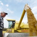 Podsticaj za proizvodnju merkantilne pšenice