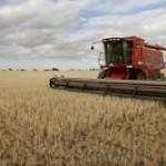 Brčko: Prinosi pšenice od 1,5 do četiri tone po hektaru