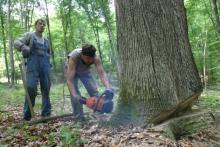 Šume RS očekuju profit do tri miliona KM