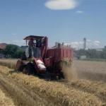 Na području opštine Zvornik prinos pšenice ispod očekivanja