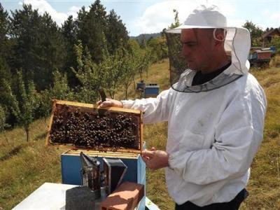 Oštećenim pčelarima u Srbiji šest miliona dinara