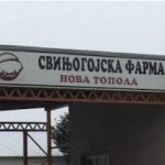 """""""Top farm"""" postaje repro centar svinjarstva u Srpskoj"""