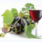 Objavljen Nacrt zakona o vinu