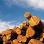 Austrija jedan od najvećih uvoznika drveta