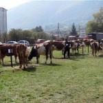 U Rogatici održani poljoprivredna izložba i sajam stoke