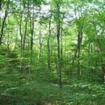 Svjetski dan šuma obilježava se danas širom planete