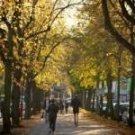 Hamburg do 2034. godine bez automobila?