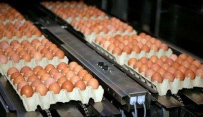 Lopov ukrao tovar jaja u vrijednosti od 22.000 dolara