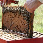 Šećer za prihranu pčela za 53 pčelara