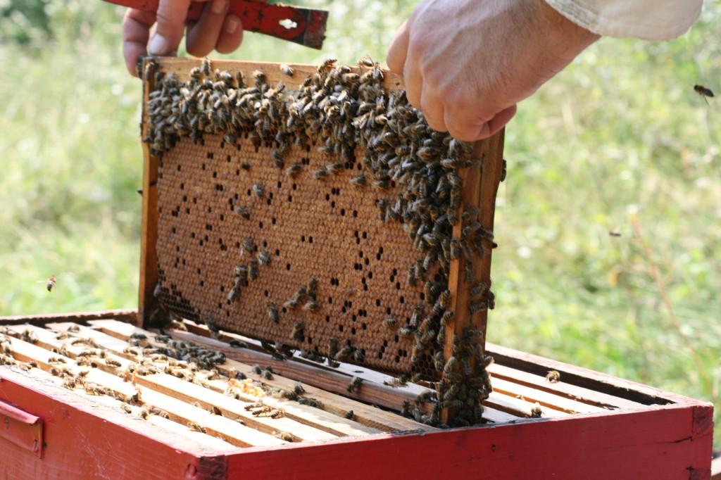 Milići: Podijeljena pčelarska oprema