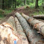 Opštine od Šuma RS potražuju 6,1 milion KM