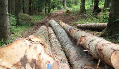 »Šumama« otpisuju 46,5 miliona KM duga